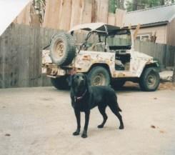 Cali dog Cruiser