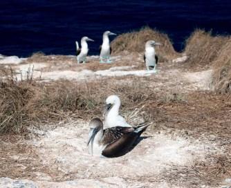 Isla Isabela inhabitants