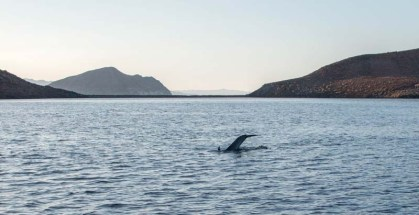 Dolphins in Don Juan