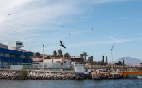 Turkey vultures hovering around the marina - never found what they wanted