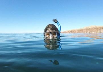 A little snorkel in Candeleros