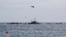 The fleet working a massive net
