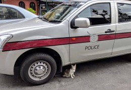 Cat guarding the police car