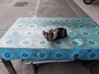 Pak Chong kitty