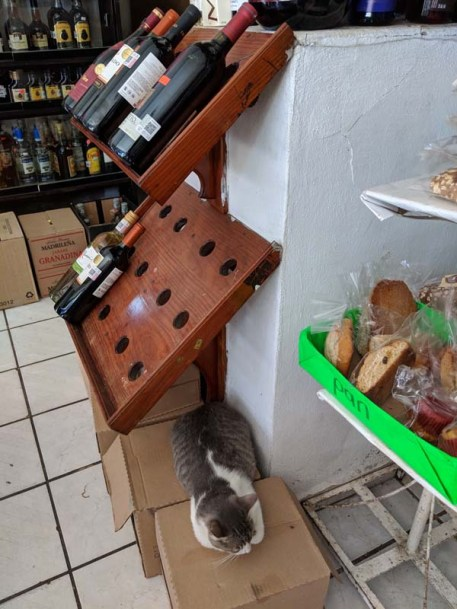 Need a cat with that wine?