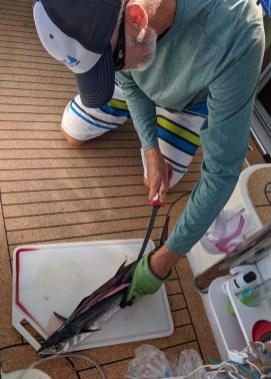 Sierra mackerel for dinner