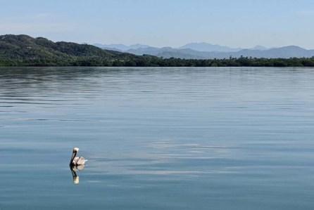 Calm, solitary peli