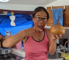 Giant jicama