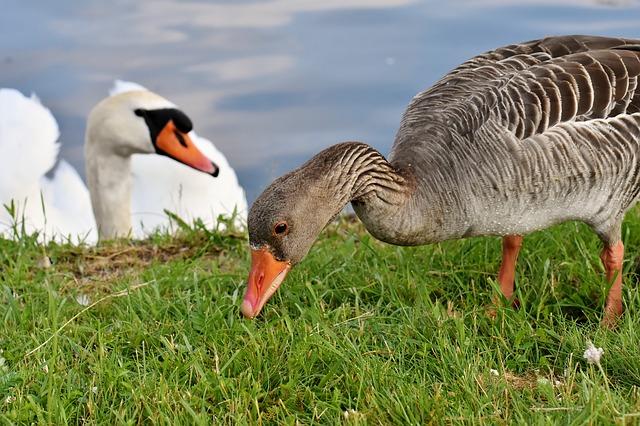 Aves De Plumas Con Producción Venta Brasil Productos Prohiben Y En BXU1xz