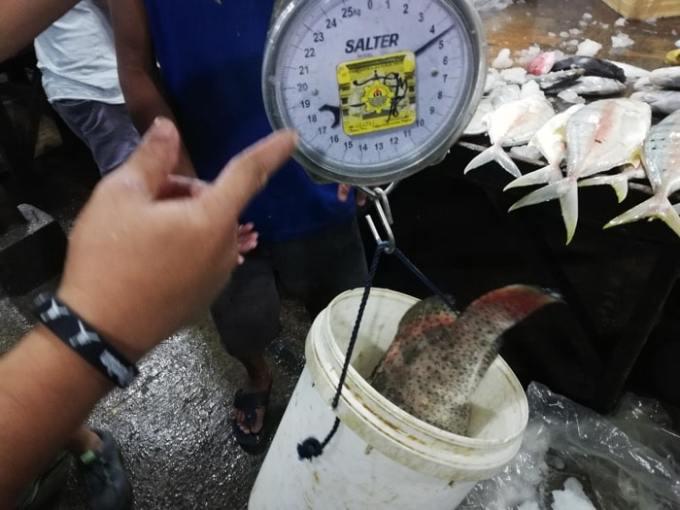 セブ、パシル、重量計
