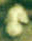 Enlargement of Cap Badge Image 3