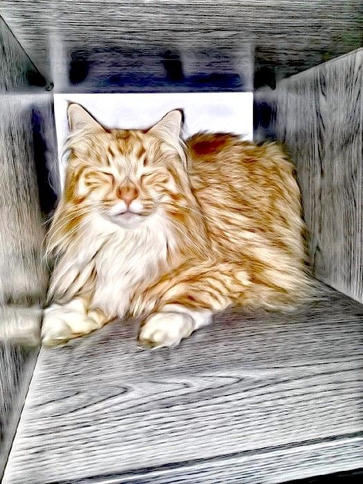 All Cat Breeds With Pictures Part 2 Free Image With Maine Coon