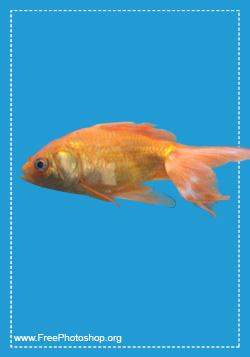 Fish Psd