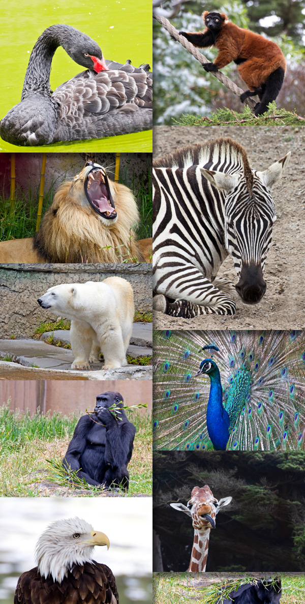 animal pictures