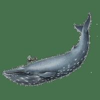 whale file freepngimg