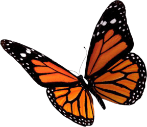 Butterfly PNG Free Butterflies PNG Clipart Images Free Transparent PNG Logos