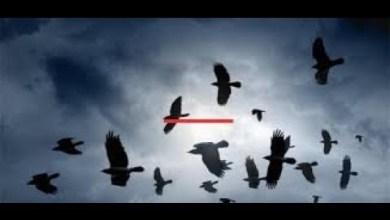 Photo of الغربان تغزو مدينة ووهان الصينية تزامنا مع تفشي كورونا.. فيديو