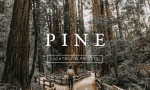 PINE Warm Moody Lightroom Presets 3335215