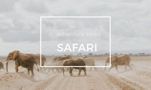 Adventure Series: Safari LR Preset 1618362