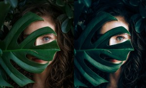 Evergreen Lightroom Presets| Desktop 4585297