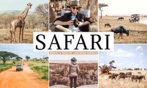 Safari Mobile & Desktop Lightroom Presets