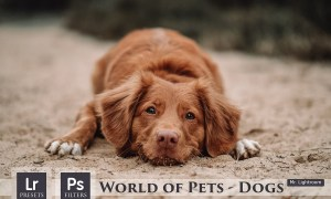 World of Pets Dogs Lightroom Presets 4413945