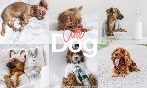 Lightroom Preset-Cute Dog Theme 4972692