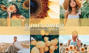 5 Sunflower Lightroom Presets 5699020