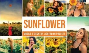 Sunflower Mobile and Desktop Lightroom Presets