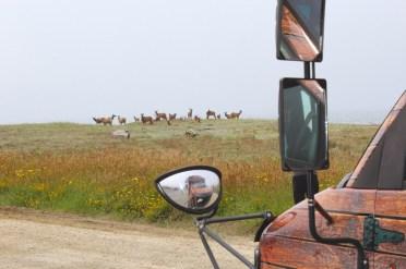 Elk brunch