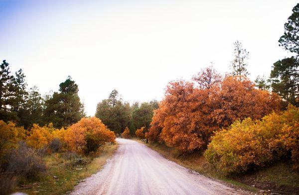 autumnbearsears13