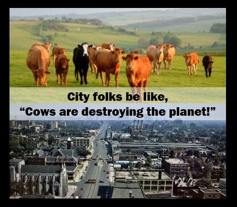 cowsmeme