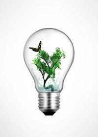 Light Bulb Plant | www.pixshark.com - Images Galleries ...