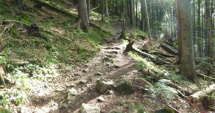 Zwiesel Trail