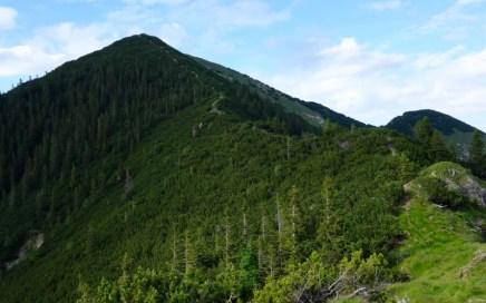 Notkarspitze Trail