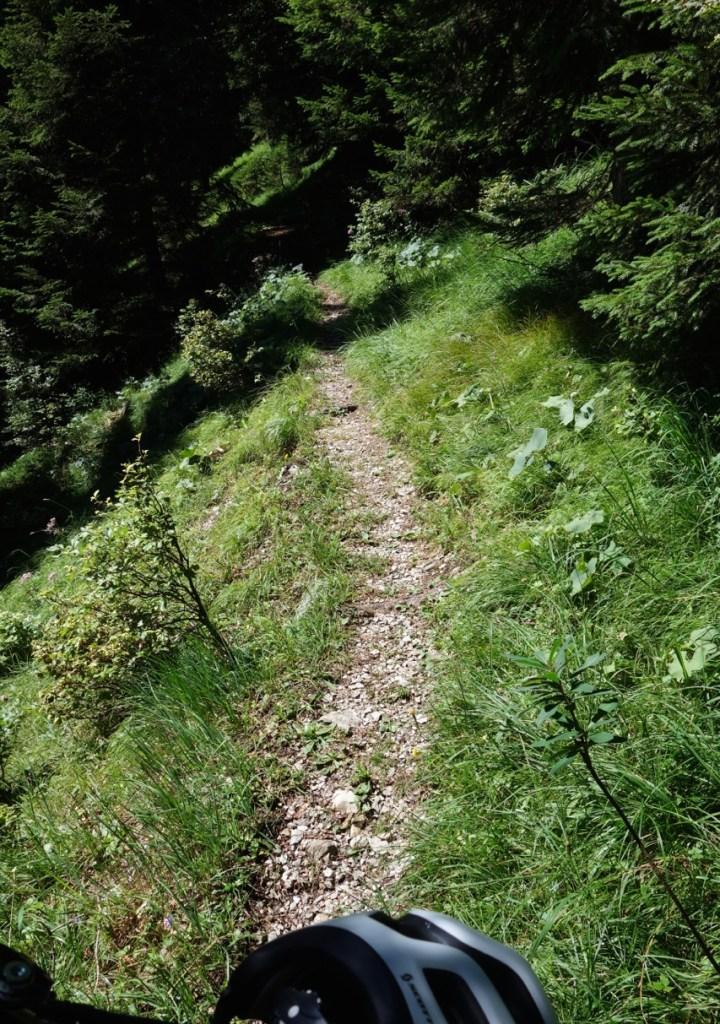 Nach wenigen Höhenmetern verengt sich der Karrenweg zum Singletrail...