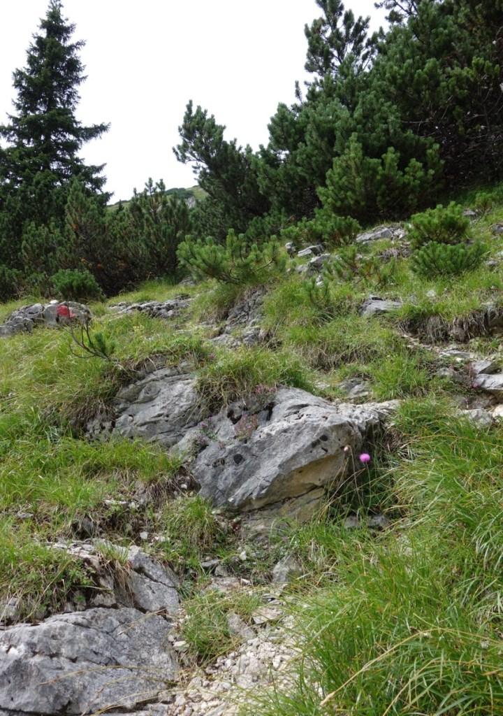 felsige Abschnitte mit hohen Stufen