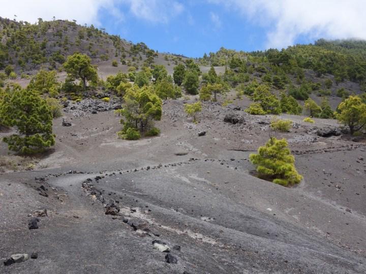 auf Lava Asche...
