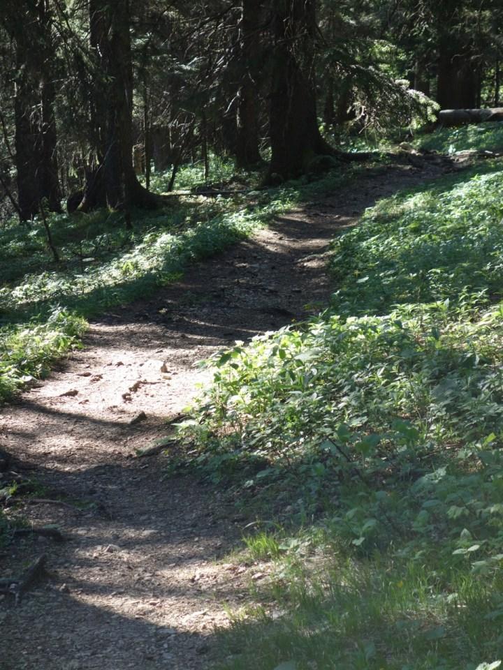 Der Geierstein Trail beginnt ausgesprochen flowig...