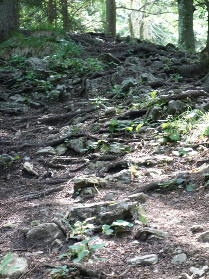 Dort warten anspruchsvolle, sehr steile, mit Wurzeln und Stufen durchsetzte Passagen, für die es am Besten Trocken sein sollte.