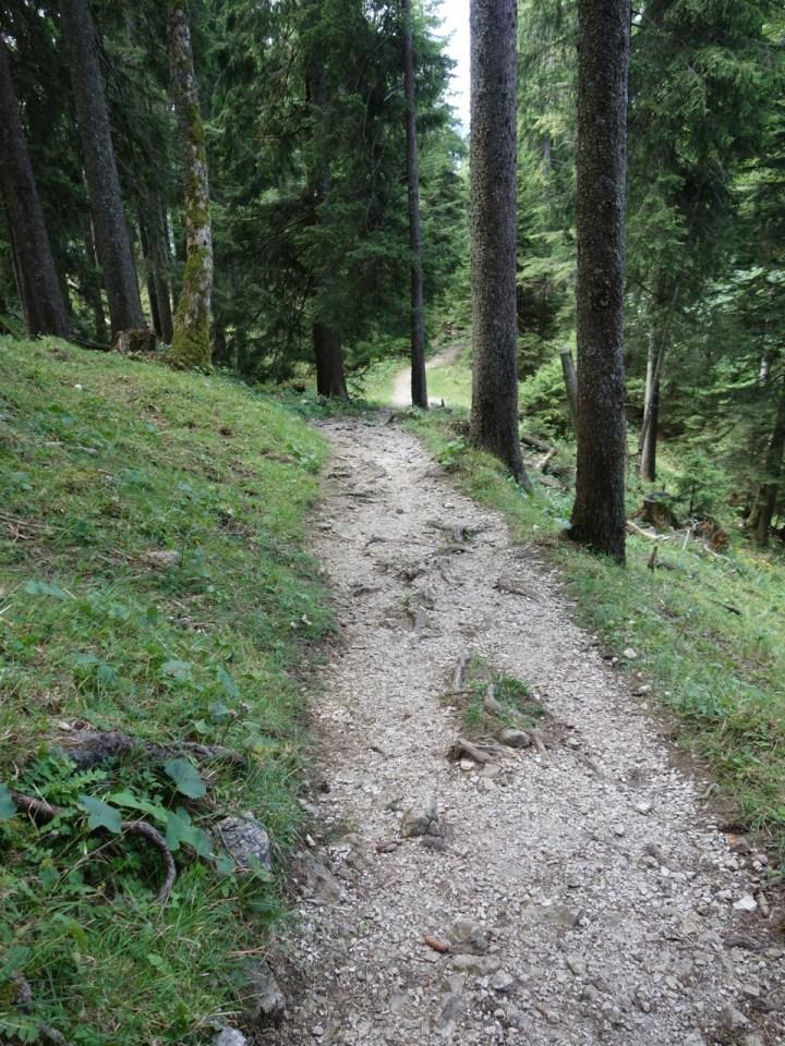 und gelangt über sehr flowige Traversen in den Wald.