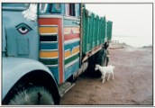 Truck with colorful, striped cabin and teal container. Boy and white goat stand next to truck.