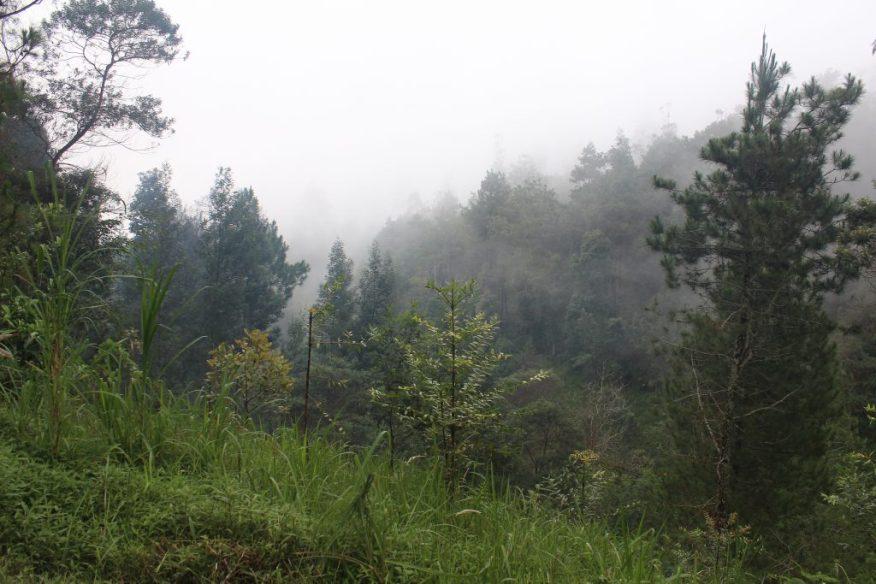 Foggy mountaintop landscape