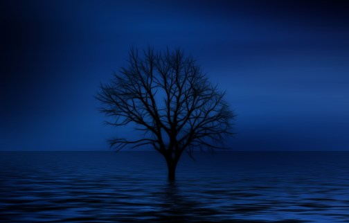 lone tree in water