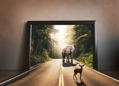 elephant & dear meeting through wall frames