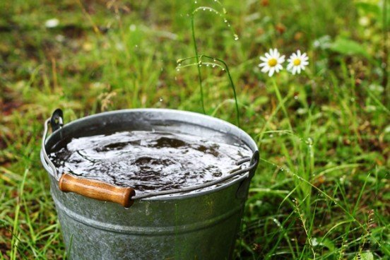 Regenwater voor je wietplant