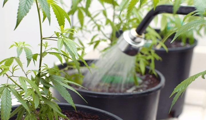 Water aan je wietplant geven
