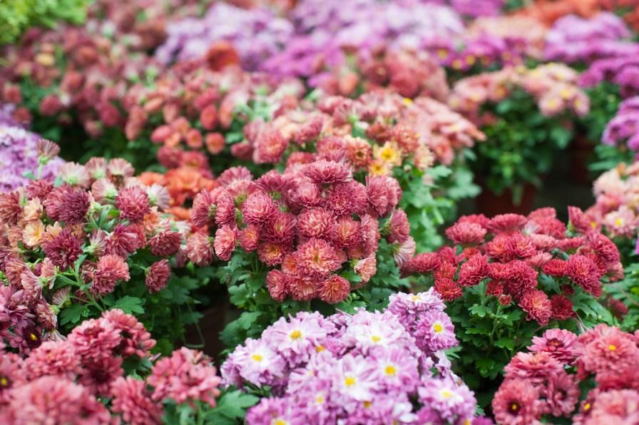 Local Flower Market selling flower pots
