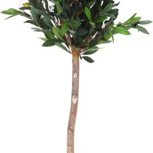 Дерево оливковое искусственное в горшке