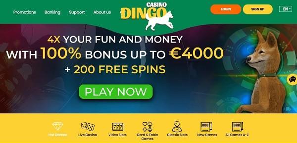 Dingo 100% bonus and 100 free spins